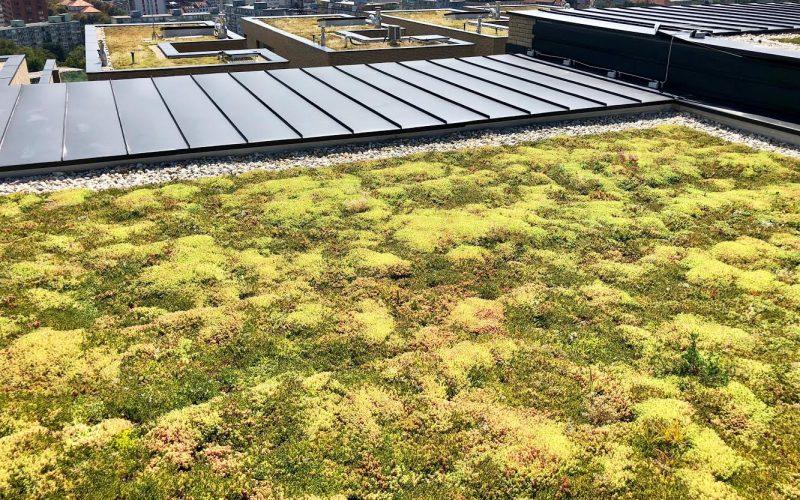 extenzívna zelená strecha