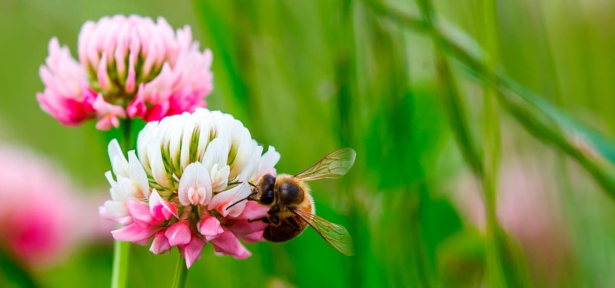 Včela na kvetine