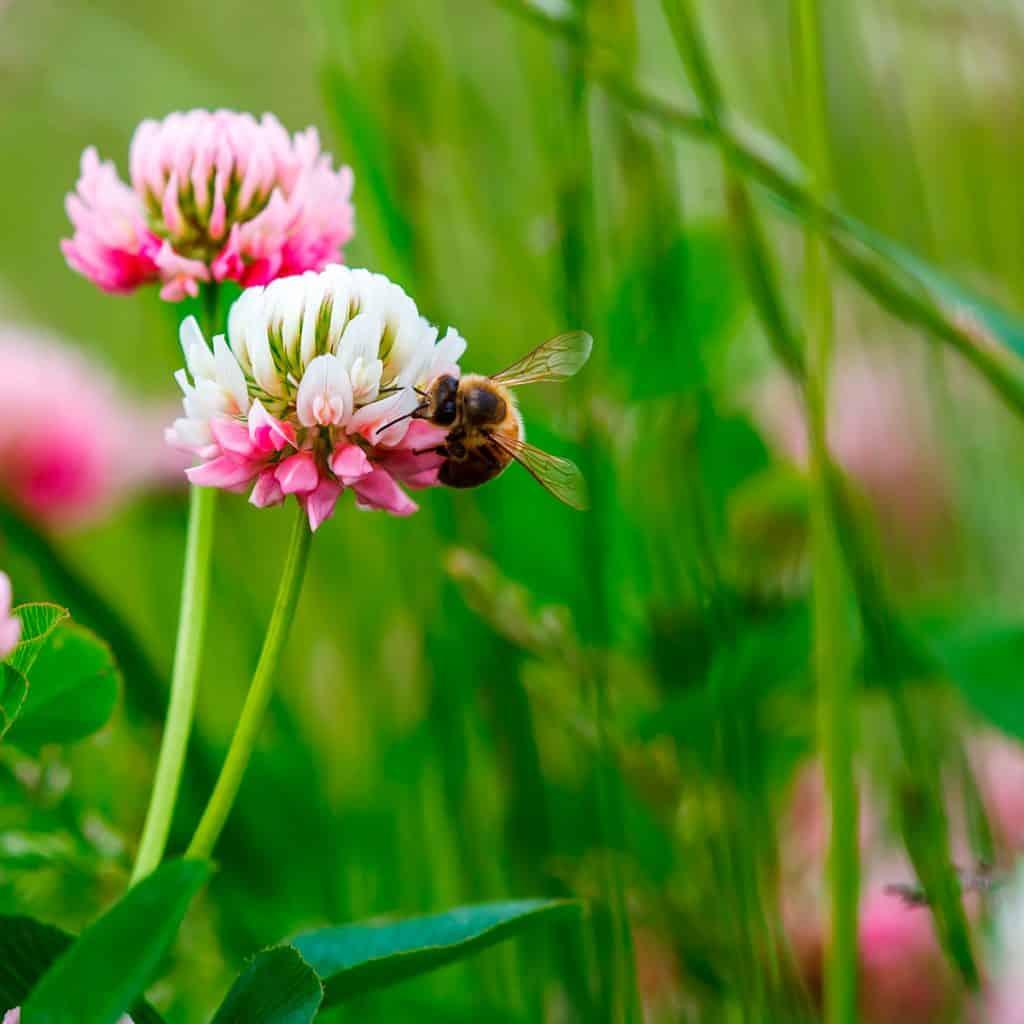 Zvýšenie biodiverzity