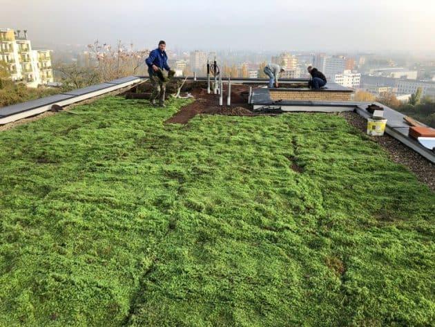Pokládka zelenej strechy
